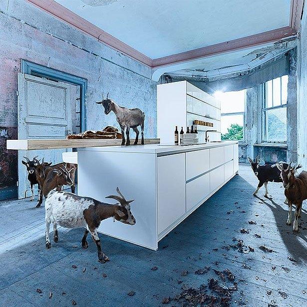 Campagne met een tijdloze keuken en geiten